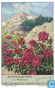 Alpenblumen 2