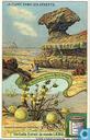 Wüstenbildungen und ihre Flora