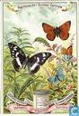 Papillons d'Europe centrale
