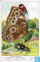 Tropische Schmetterlinge und Käfer