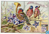 Aus der Vogelwelt I