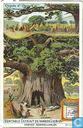 Merkwürdige Bäume I