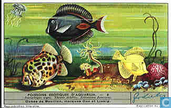 Exotische Aquarium-Fische