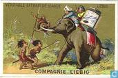 avventure di un elefante