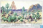 Klima und Pflanzenwelt
