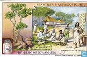 Nützliche Schilf- und Rohrpflanzen