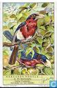 Bärtige Vögel