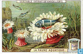 Tierleben im Wasser