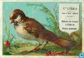 Oiseaux brown TXT