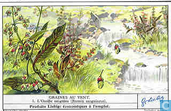 Samenflug im Pflanzenreich