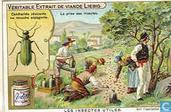 Nutzbringende Insekten