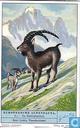 Tierwelt der Alpen