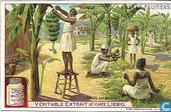 Nutzung der Fruchtbäume