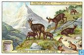 Tiere im Hochgebirge