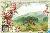 Aus Wald und Feld