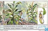Insektenfressende Pflanzen