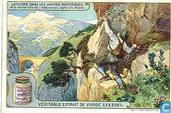 Flora im Hochgebirge