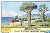 Merkwürdige Bäume II