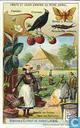 Der Obstbau und seine Feinde in der Tierwelt