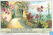 Die Blumenwelt der Riviera