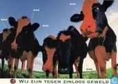B003199 - Tegen Zinloos Geweld