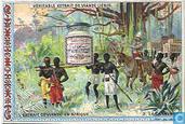Das Fleisch-Extract in Afrika