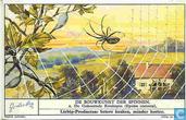 Baukunst der Spinne
