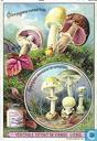 Essbare Pilze 2
