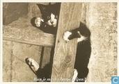 S000814 - Dierenbescherming