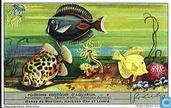 Poissons exotiques d'aquarium