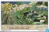 Die Blütenpracht der Wasserpflanzen