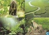 C000281 - Wereld Natuur Fonds
