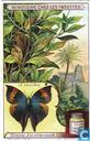 Schutzanpassung der Insekten