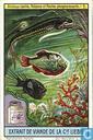 Leuchtende Meeres-Tiere und Pflanzen
