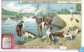 Aufzucht und Pflege von Nutztieren