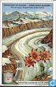 Gletscher und Hochalpen-Flora