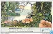 Schmarotzer-Pflanzen