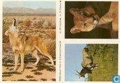 ESSO-album foto nr.5 Eland-antilope, nr.26 Cojote en nr.31 Poema