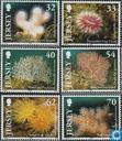 2004 Les anémones de mer (JER 244)