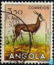 Animals from Angola