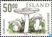 Eetbare paddenstoelen