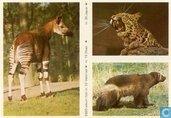 ESSO-album foto nr.23 Veelvraat, nr.15 Okapi en nr.30 Jaguar