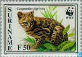 Jaguarondi et WWF-petit chat