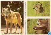 ESSO-album foto nr.8 Kameel, nr.39 Wolf en nr.6 Wrattenzwijn