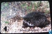 Dessert Hedgehog (Egel)