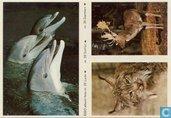 ESSO-album foto nr.22 Lynx, nr.28 Dolfijn en nr.35 Damhert