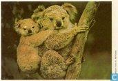 ESSO-album foto nr.49 Koala