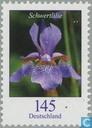 Flowers (VIII)