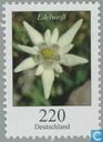Fleurs (XI)