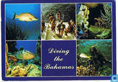 Diving the Bahamas